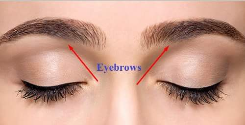 eyebrows hindi eyes in hindi