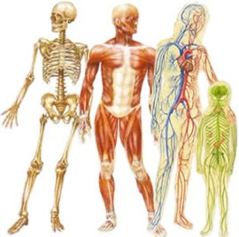 human body information in hindi