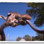 Amazing Animal Facts in Hindi 2 : 23 मज़ेदार तथ्य