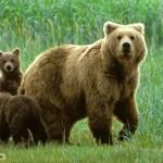 Bears Facts in Hindi : भालुयों के बारे में 31 रोचक तथ्य