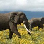 हाथीओं के बारे में 31 मज़ेदार बातें
