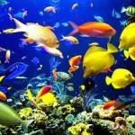 मछलियों के बारे में 30 मज़ेदार तथ्य : भाग 2