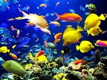 मछलियों के बारे में 30 मज़ेदार