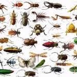 Insects Facts : कीड़ों के बारे में 44 रोचक तथ्य