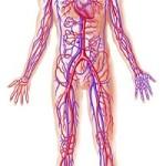 मानव शरीर के बारे में 21  मज़ेदार बातें – Human Body