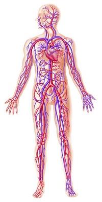 human body hindi