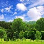 पेड़ों की 20 मज़ेदार बातें – Trees in Hindi