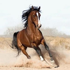 horses facts in hindi