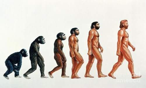 Darwin Theory of Evolution in Hindi
