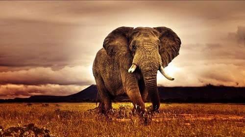 africa mahadeep ki jakari