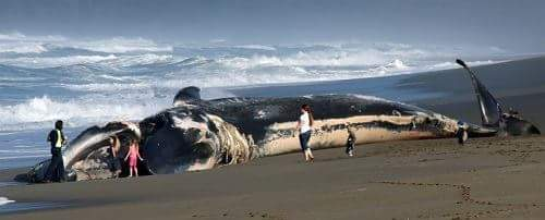 blue whale hindi me