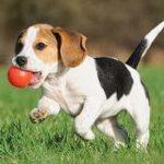 """गारंटी के साथ कहते है """" कुत्तों """" के बारे में यह 18 बातें आपको पता ना होंगी !"""