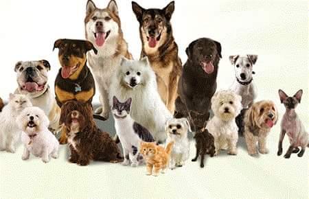 dogs in hindi
