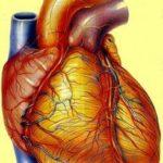 दिल के बारे में 21 रोचक और मनोरंजक जानकारियां