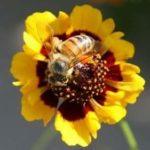 शहद की मक्खियों से जुड़े 13 रोचक और ज्ञानवर्धक तथ्य