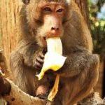बंदरों के बारे में 13 रोचक और ज्ञानवर्धक जानकारीयां