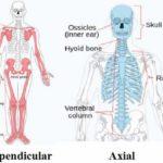 हड्डियों से जुड़े 27 मज़ेदार तथ्य | About Bones in Hindi