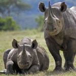 गेंडा के बारे में 25 मज़ेदार बातें | Gainda | Rhinoceros in Hindi
