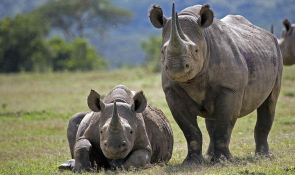 गेंडा  Gainda Rhinoceros in Hindi