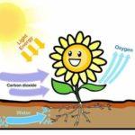 प्रकाश संश्लेषण क्रिया की महत्वपूर्ण बातें | Photosynthesis in Hindi