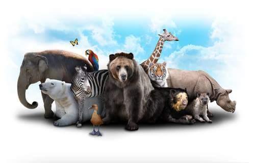 Animals Birds Information in Hindi