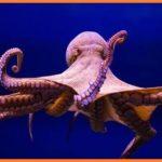 ऑक्टोपस समुंद्री जीव के बारे में 14 रोचक जानकारियां | Octopus in Hindi